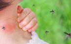 انتشار البعوض في إقليم الناظور يزعج الساكنة ويسبب أمراض خطيرة