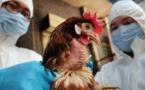 الصين تسجل إصابة بسلالة جديدة من إنفلونزا الطيور
