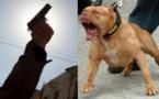 """ثلاثيني يخرق حالة الطوارئ ويحرض """"كلبا شرسا"""" لمواجهة الأمن"""