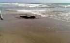 جثة مجهولة قرب شاطئ كيمادو تستنفر السلطات الأمنية بالحسيمة