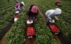 إسبانيا تستعد لاستقبال آلاف العاملات المغربيات في حقول الفراولة