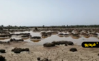 كارثة بيئية خطيرة تهدد جهة الشرق.. نهر ملوية لم يعد يصب في البحر الأبيض المتوسط