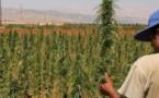 توقيف رئيس جماعة بالحسيمة بتهمة زراعة الكيف