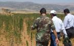 الأمن يبحث عن هويات سياسيين وبرلمانيين يستغلون أراضي الكيف بالشمال والريف