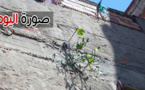 صورة اليوم: شجيرة صغيرة تنمو في جانب أحد المنازل في الناظور