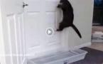 بالفيديو.. شاهدوا القط الأعجوبة يستطـيع فتح أي باب بذكاء بشري