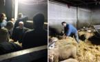 الجالية المسلمة ببلجيكا تستعد على قدم وساق لإستقبال عيد الأضحى المبارك