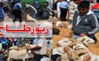 إقبال ضعيف على اقتناء أضاحي العيد.. وارتفاع صاروخي في الأسعار بسوق أزغنغان الأسبوعي