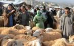 تفشـي ظاهرة سرقة أكباش العيد ببعض أحياء مدينة ازغنغان