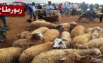روبورطاج: سوق العروي يسجل وفرة أضاحي العيد والأسر تستاء من حمى الأسعار