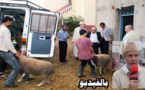 المجلس العلمي ومندوبية الشؤون الإسلامية يشرفان على توزيع أضاحي العيد