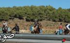 أسعار الحمير ترتفع بالجهة الشرقية بسبب تهريب الوقود الجزائري