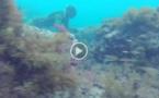 إطلاق مشروع تنظيف قعر شواطئ المنتزه الوطني للحسيمة