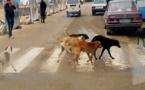 سكان بن طيب يتعايشون مع الكلاب الضالة.. من المسؤول وهل من حل؟