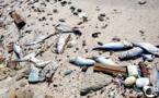 من مقبرة جماعية للمهاجرين إلى ارتفاع نسبة تلوث مياه البحر الأبيض المتوسط
