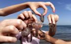 قناديل البحر.. شبح المصطافين بشواطئ الناظور والحسيمة وأخصائية تقدم النصائح للمصابين