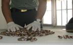 إيقاف عصابة تهرب المخدرات داخل أحشاءها من شمال المغرب الى الجنوب الاسباني