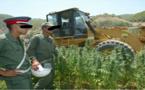 معاناة مزارعي الكيف بالشمال مع السلطات المحلية