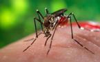 """وزارة الصحة تؤكد عدم تسجيل أي حالة إصابة بفيروس """"زيكا"""" بالمغرب و تقدم هذه النصائح للمواطنين"""