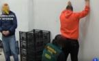 بالفيديو.. إسبانيا تفكك شبكة لتهريب المخدرات من المغرب بواسطة المروحيات