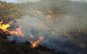 مرة أخرى.. حريق يأتي على مساحات مهمة من غابات الريف الغربي