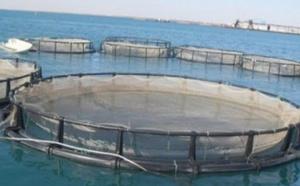 جهة الحسيمة- طنجة تحفز على الاستثمار في تربية الأحياء البحرية