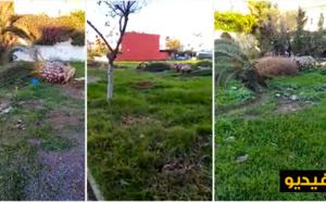 """ساكنة """"الفطواكي"""" متخوفة من الإجهاز على """"حديقة"""" وسط حيها بعد تقطيع أشجارها وتدعو حوليش للتدخل"""