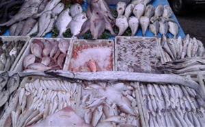 خطير... تقرير يفضح مافيات متورطة في إشعال أسعار السمك خلال رمضان