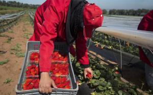 جمعية حقوقية تحتج تضامنا مع عاملات الفراولة المعتدى عليهن بإسبانيا