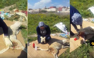 هكذا تواجه سيدة صعوبات أثناء علاجها كلبا مصابا بسبب غياب مركز بيطري بالناظور