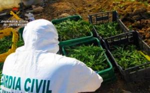 """الشرطة الإسبانية تفكك شبكة إجرامية تنشط في زراعة مخدر """"الماريخوانا"""" داخل منتزه طبيعي"""