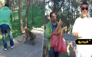 بعد نشر نداء على ناظورسيتي.. نشطاء ناظوريون في زيارة إنسانية لإطعام القردة بجبل كوروكو